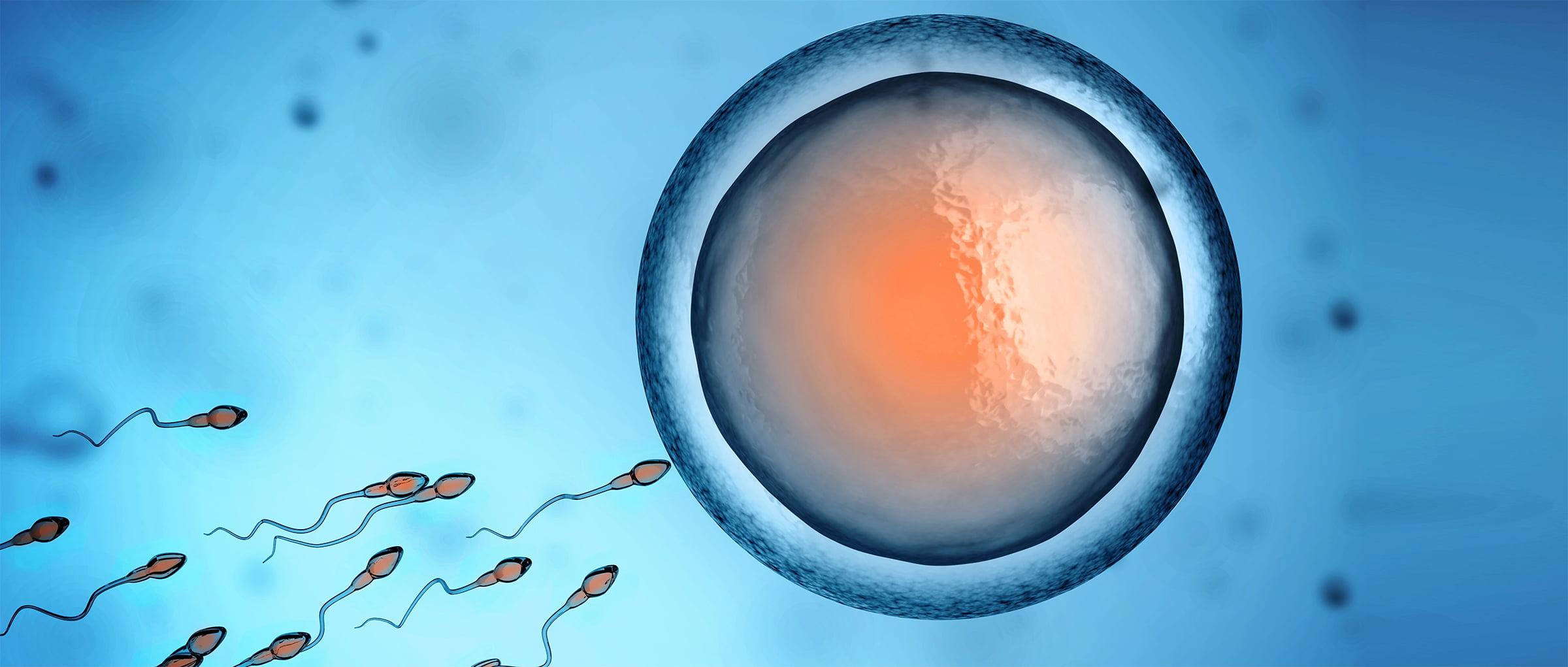 Producción de embriones