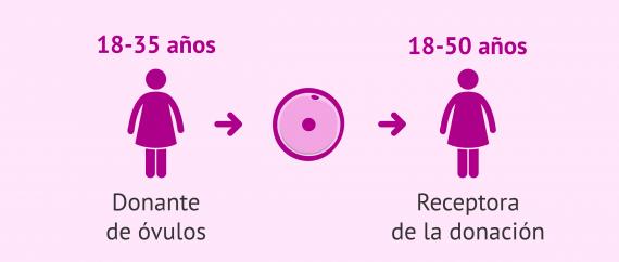 Edad limite para la donación de óvulos