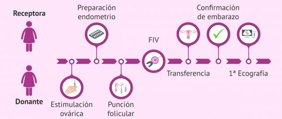 ¿Cómo es la FIV con ovodonación y cuáles son los pasos para las receptoras?