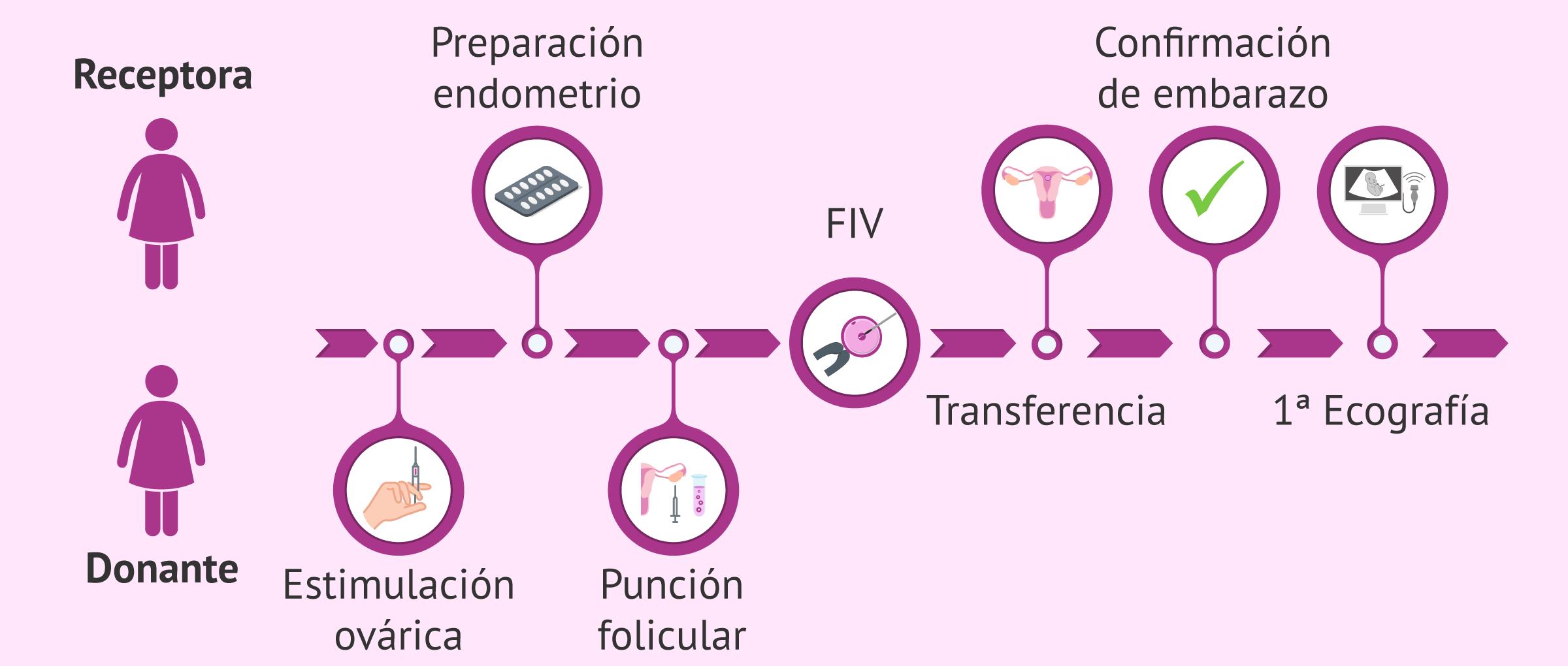 FIV con ovodonación: pasos del tratamiento para las receptoras