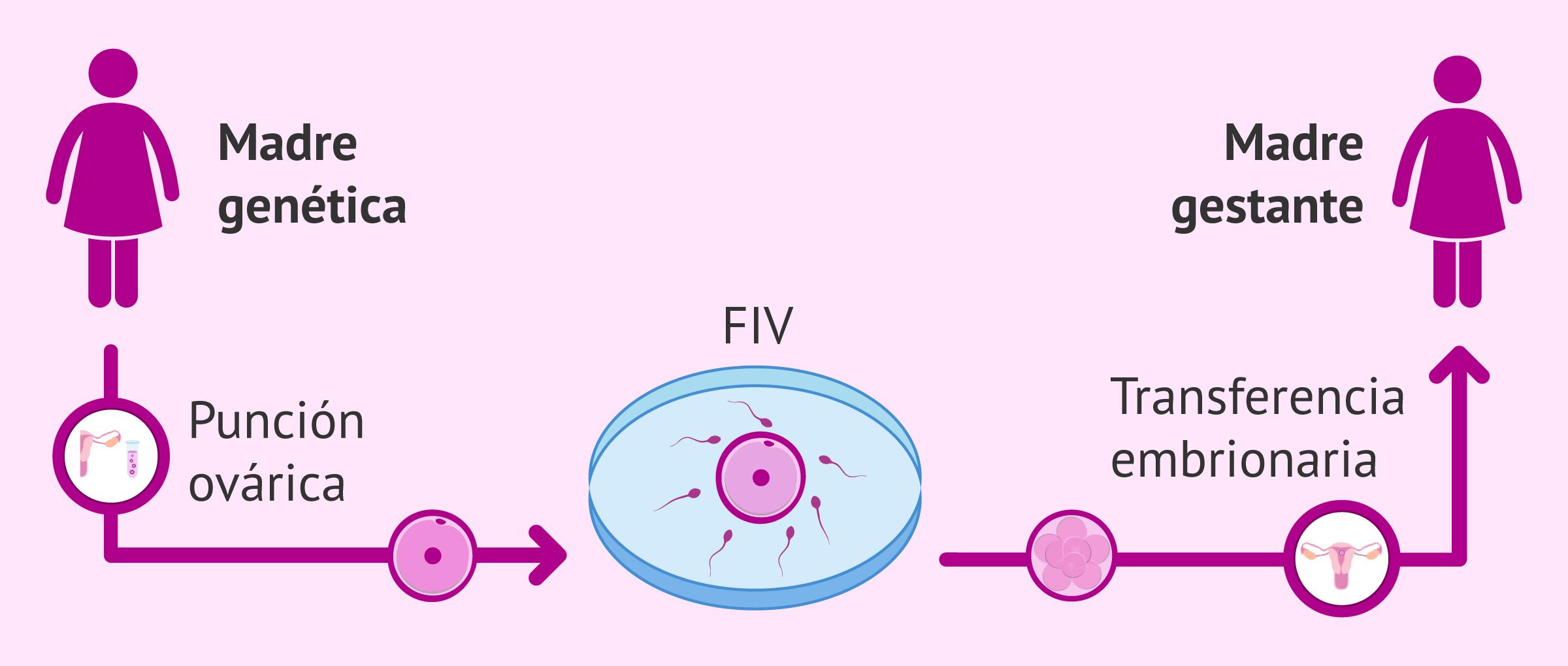 Método de recepción de óvulos de la pareja (ROPA)