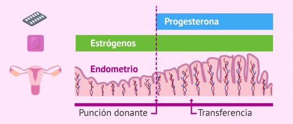 Medicación para preparar el endometrio