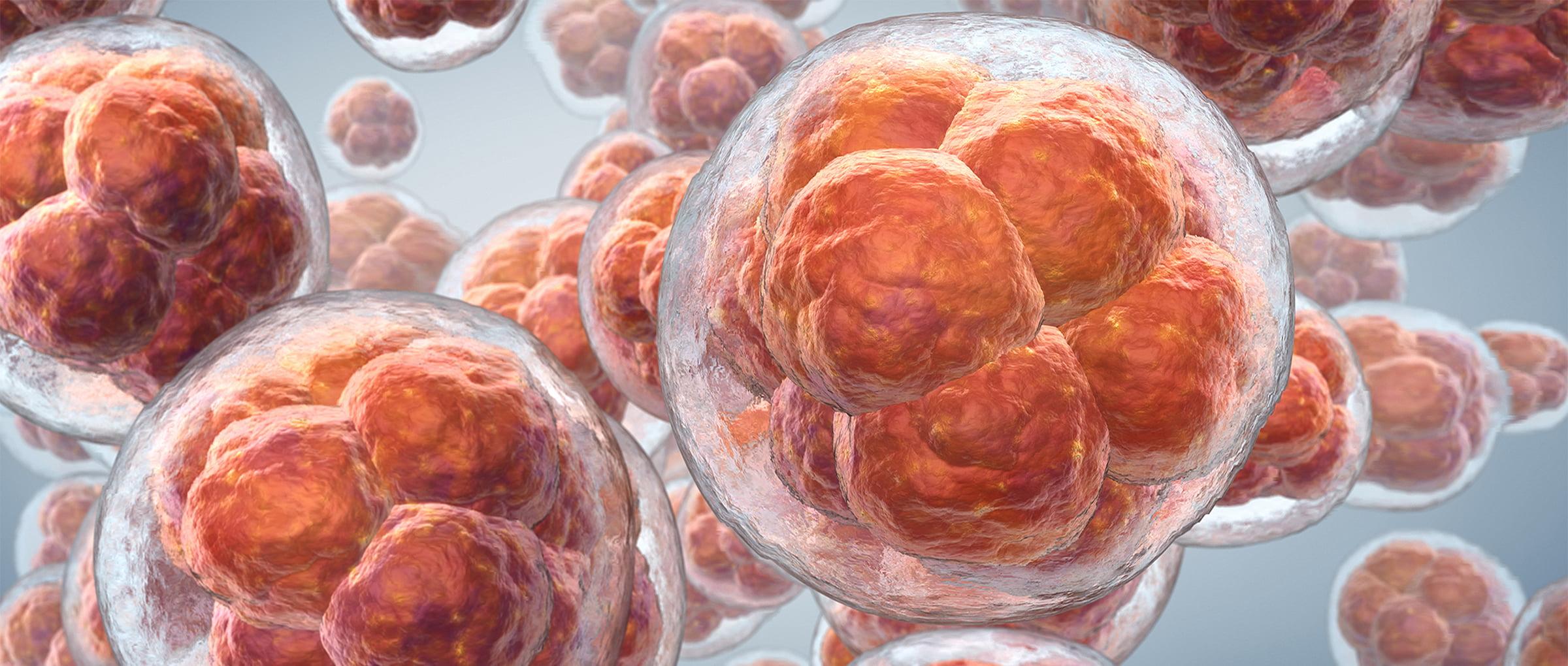 Donación de embriones en Chipre