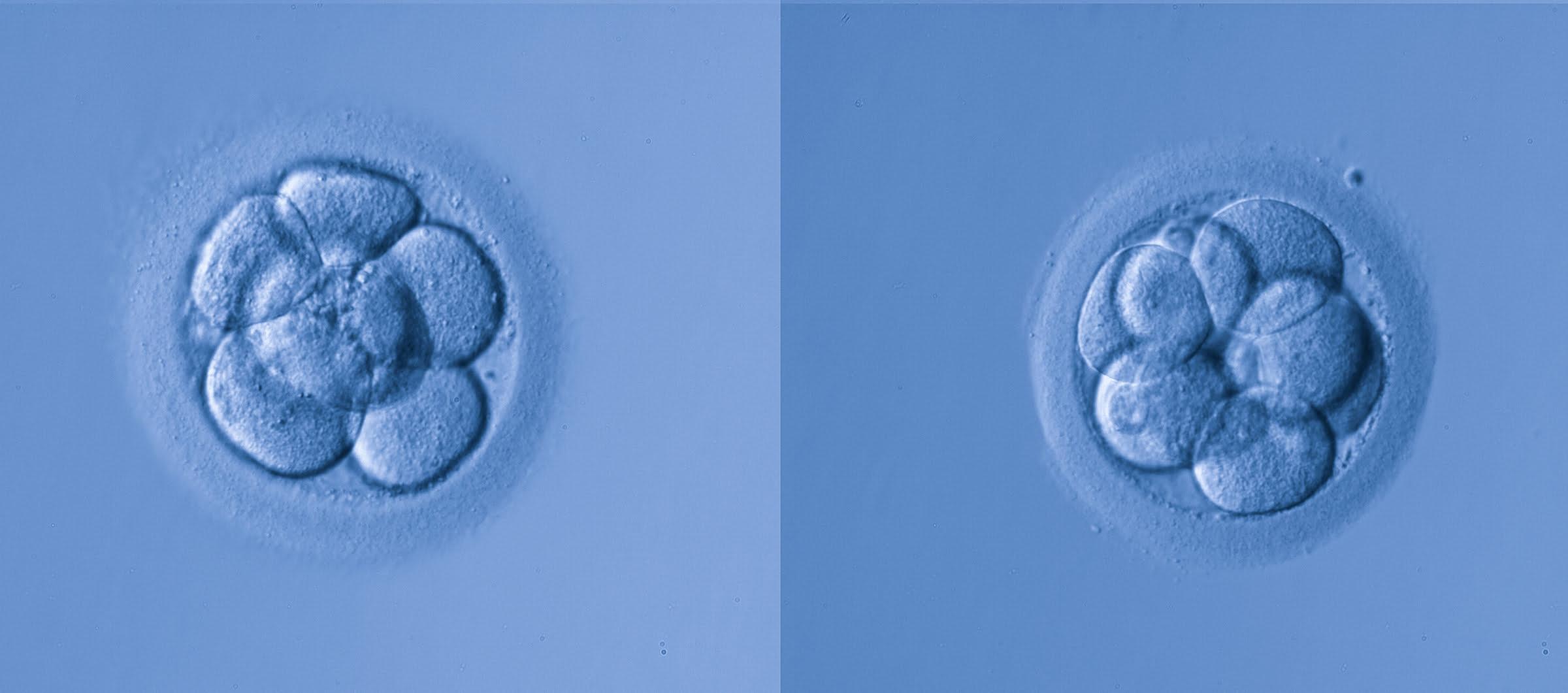Donación o adopción de embriones sobrantes