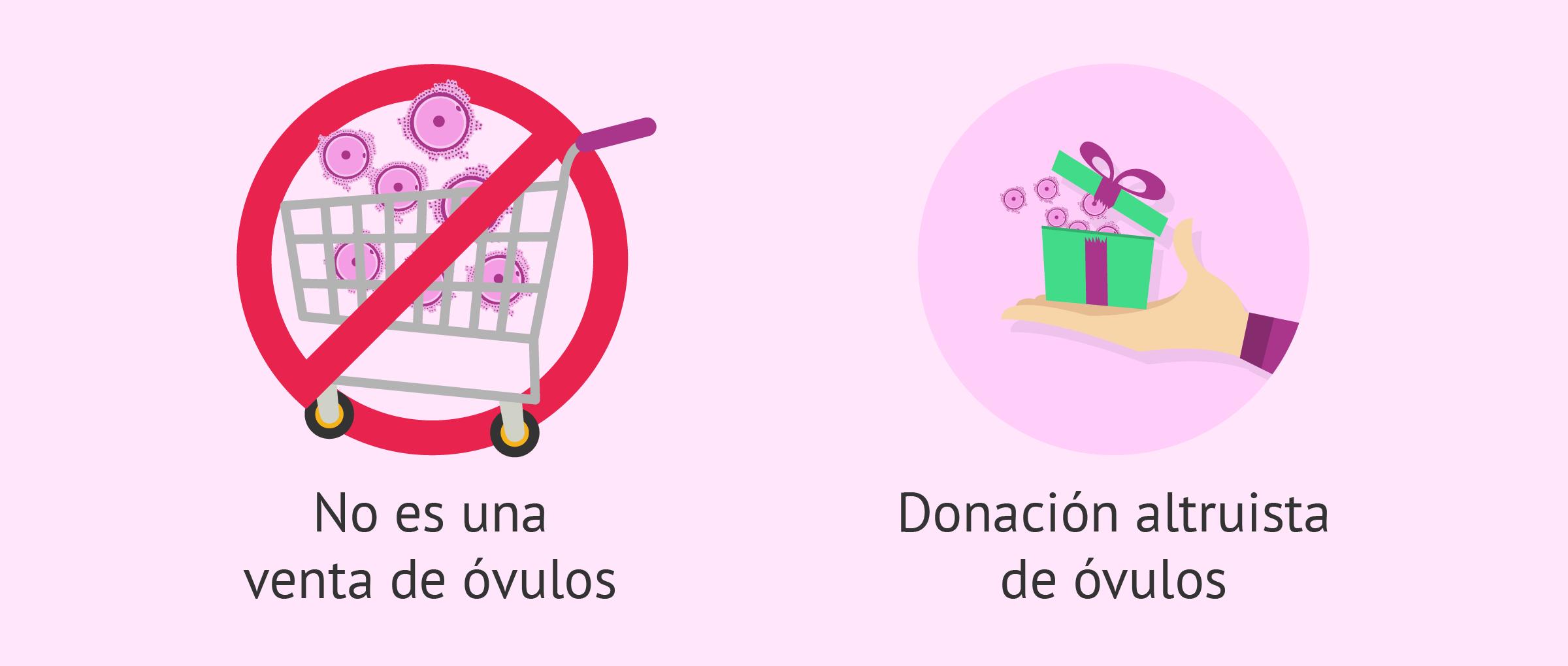 Ser donante de óvulos