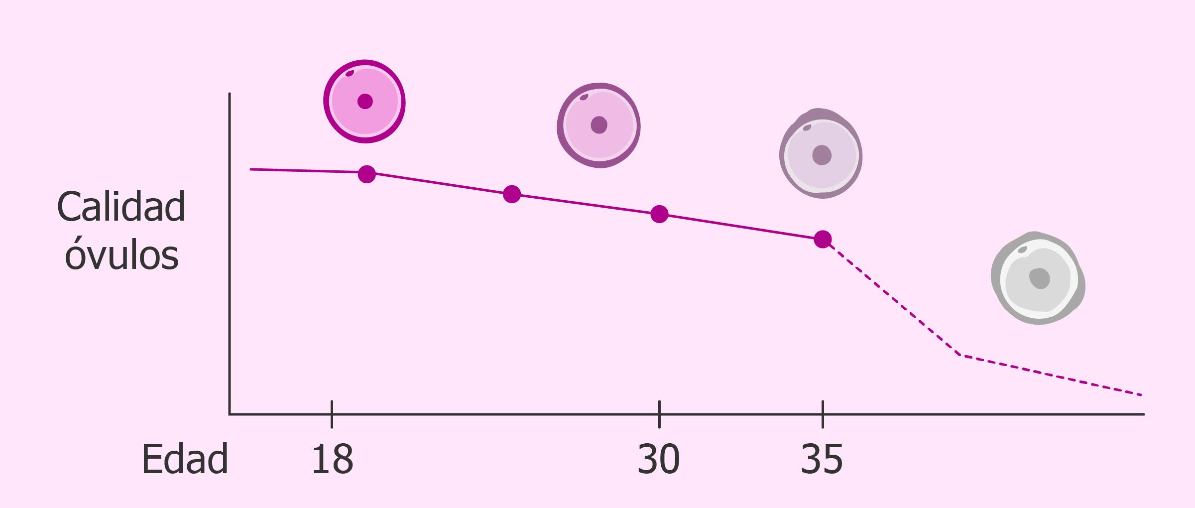 La calidad de los óvulos empeora con los años