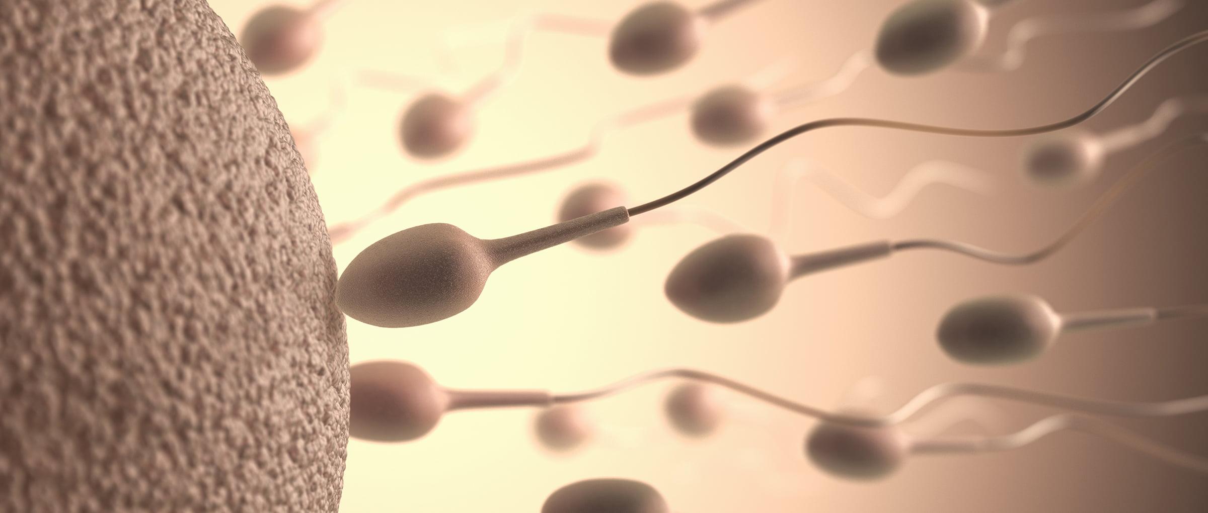 Fecundación en inseminación artificial