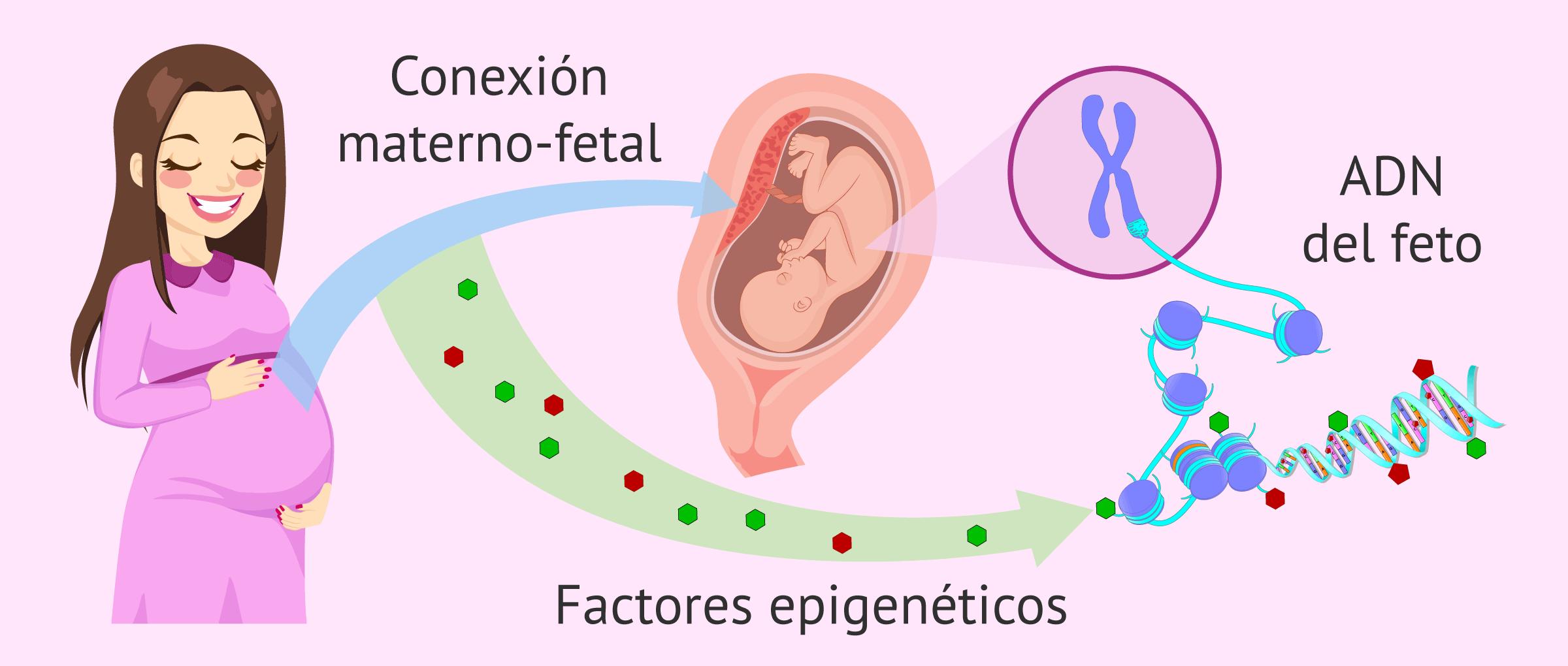 Epigenética y donación de óvulos