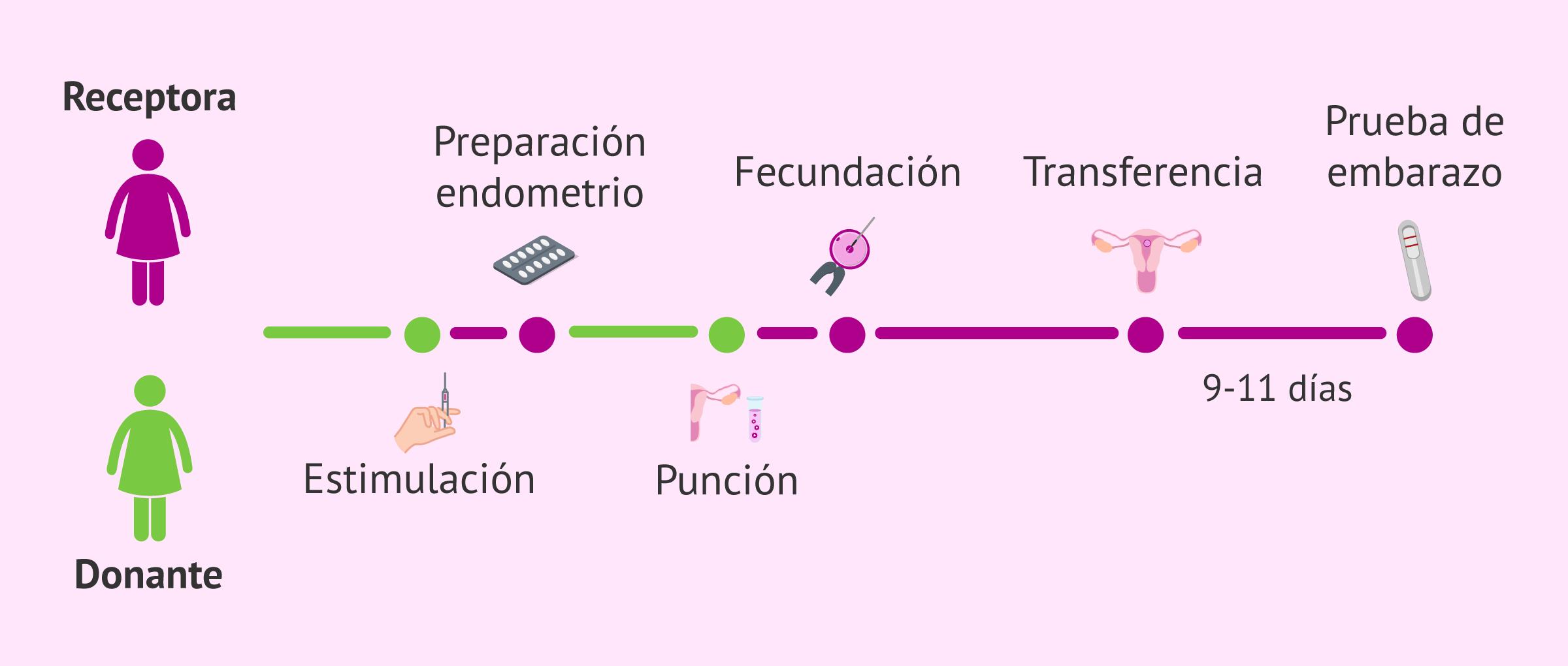 Sincronización de la donante y la receptora de óvulos
