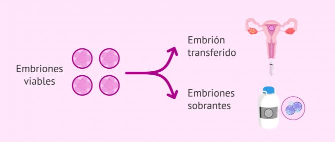 Imagen: Vitrificación de embriones
