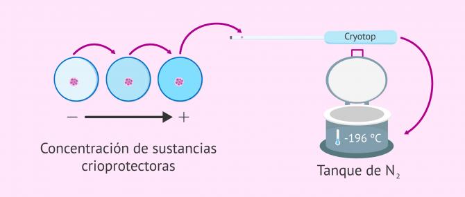 Imagen: Congelación embrionaria