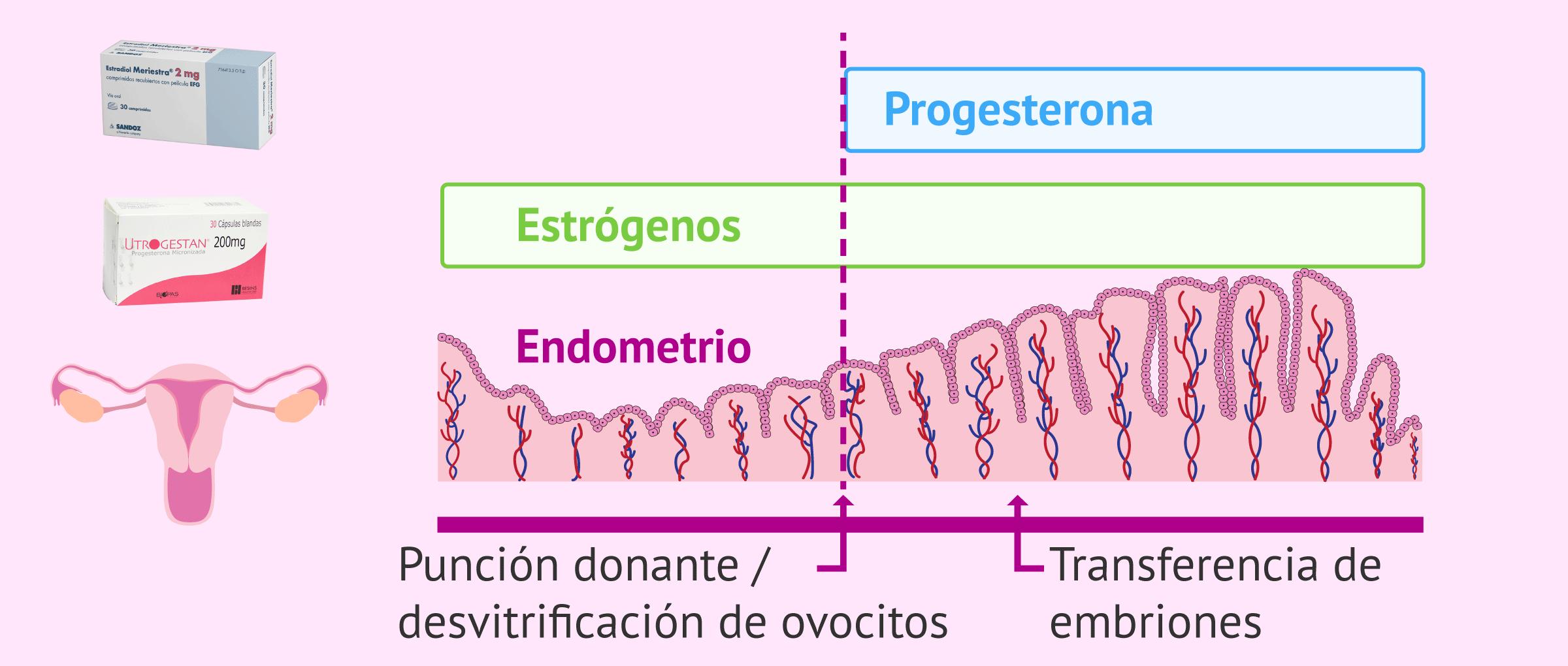 Medicación para la receptora de ovodonación: preparación del endometrio