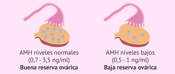 Información que proporcionan los valores de AMH