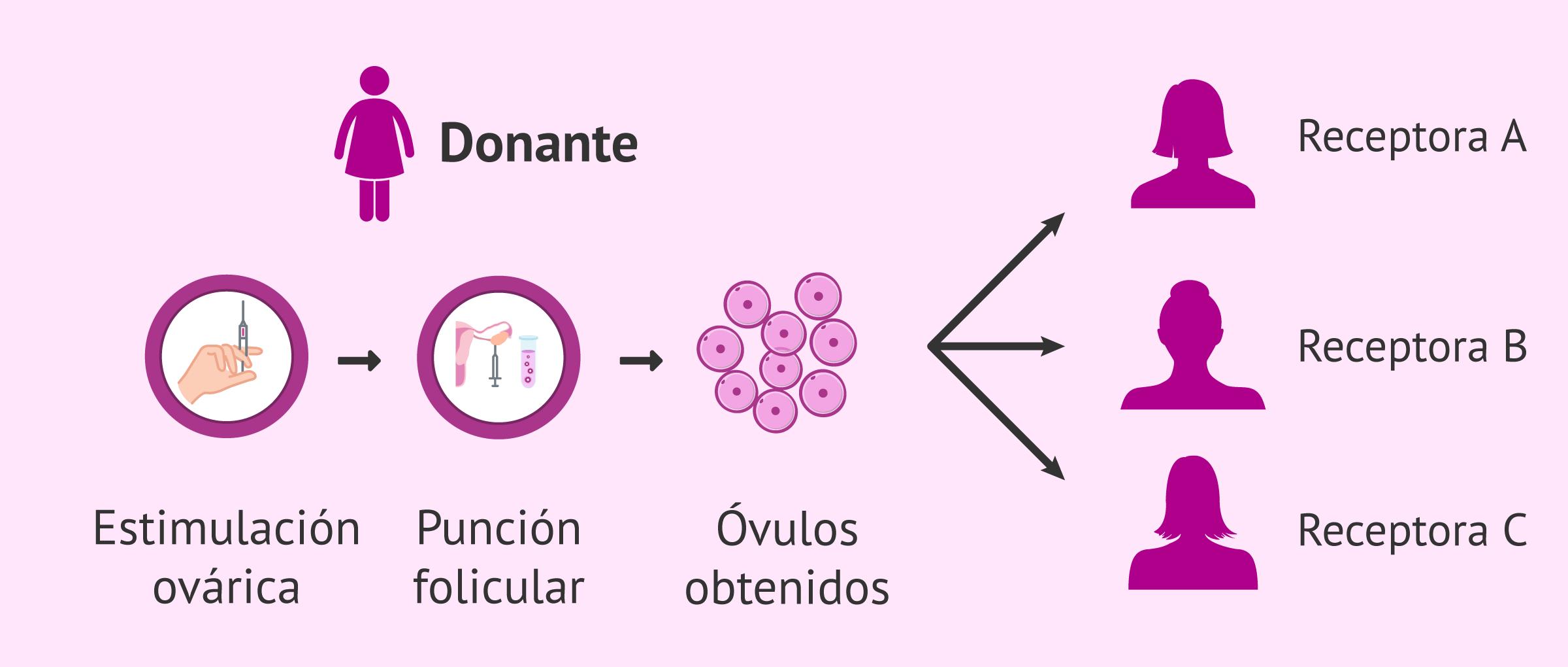 Donación de óvulos compartida
