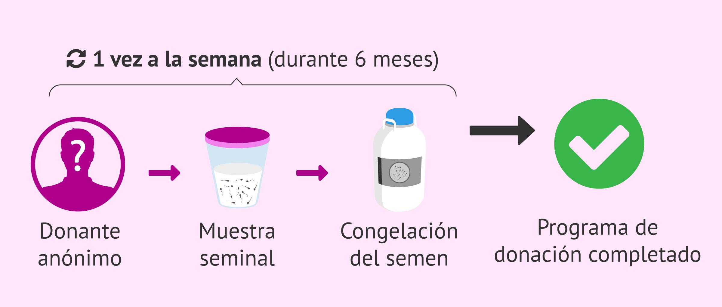 Obtención de la muestra de un donante de semen