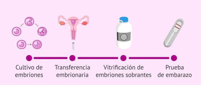 Imagen: Continuación del proceso de FIV