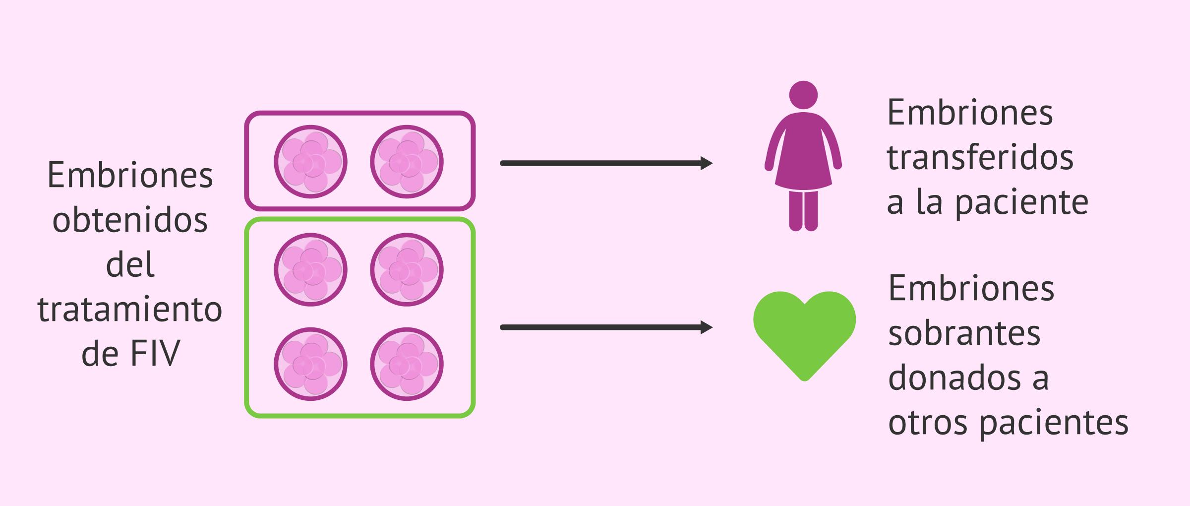 Donación de embriones o embrioadopción
